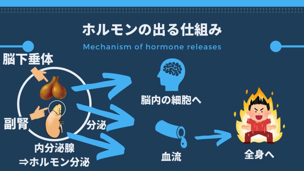 mechanism of hormon